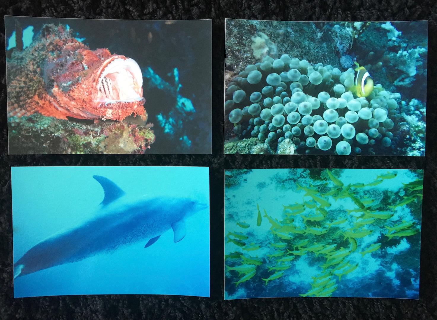 Купить ИЗОБРАЖЕНИЯ Рыба Дайвинг РИФ корраловая 4-стоп ПЬЕСЫ на Eurozakup - цены и фото - доставка из Польши и стран Европы в Украину.
