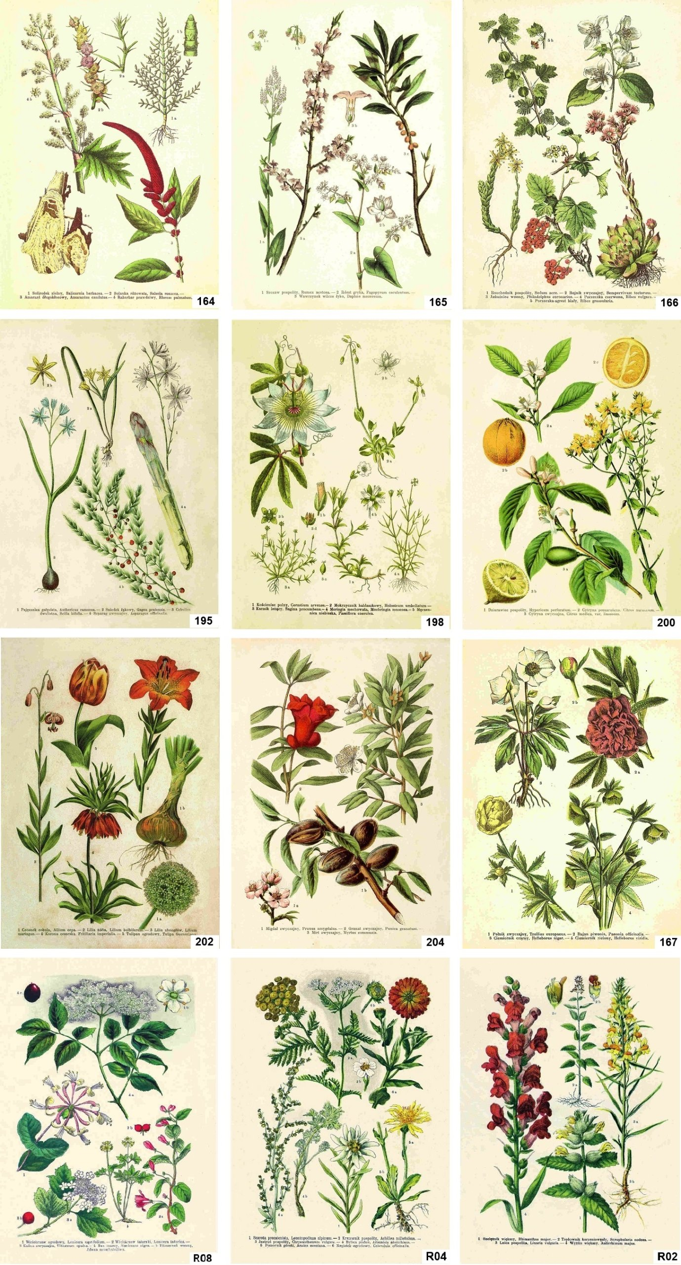 Атлас растений в картинках с названиями часть обзавелась