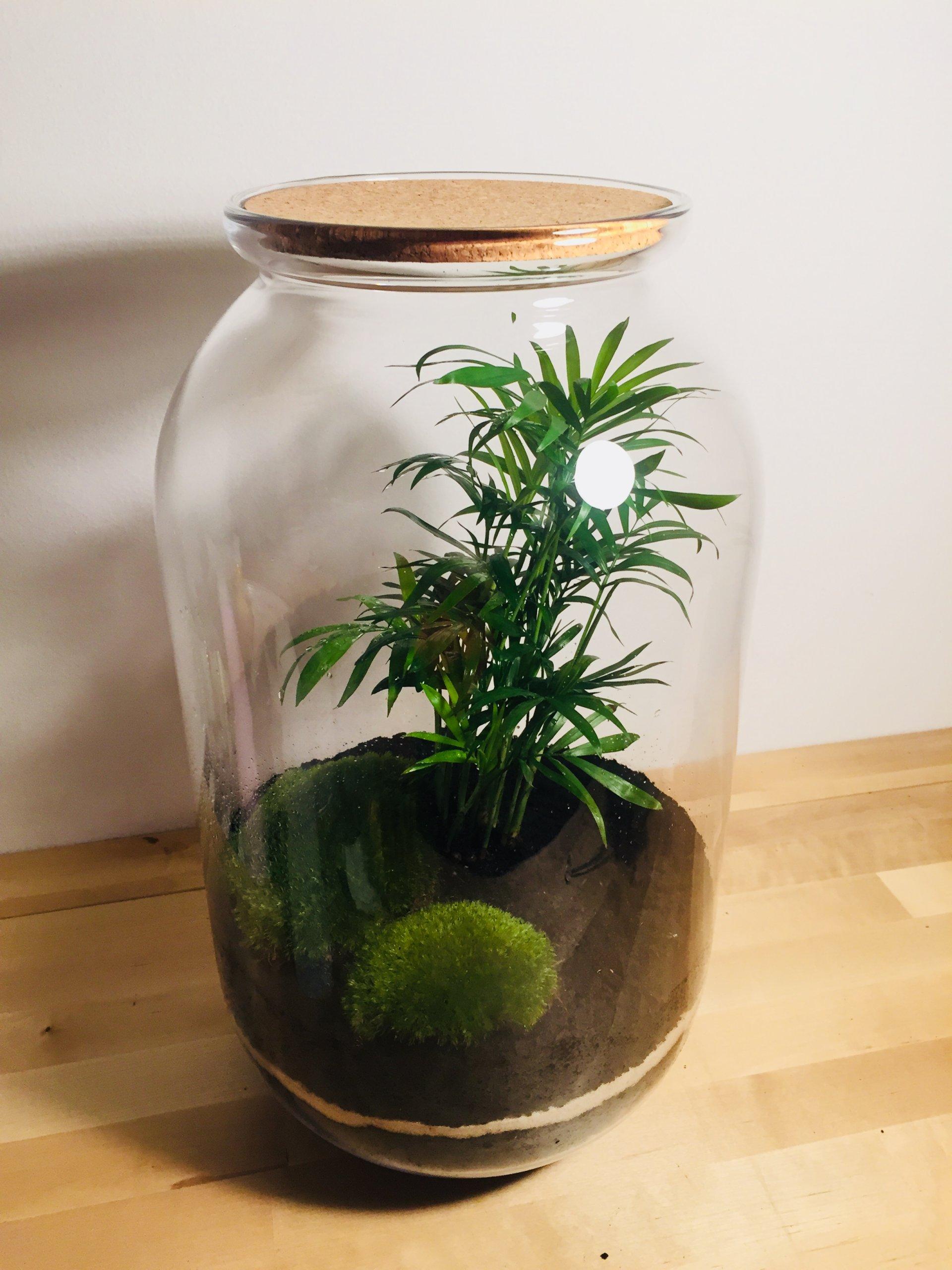 Rośliny W Szkle Las W Słoiku Diy Nature Glass