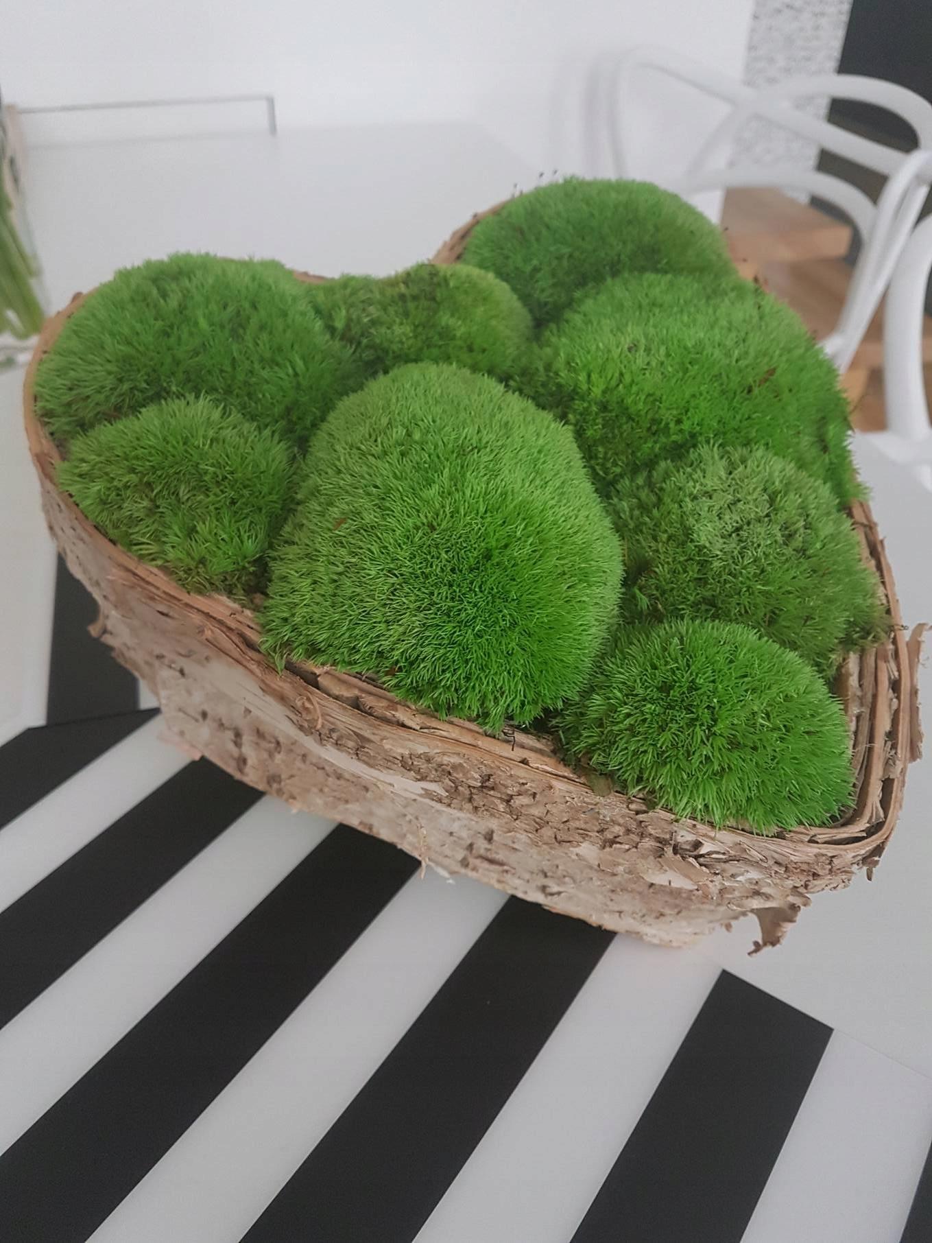 Mech Naturalny Zielone Sciany Ogrody Wertykalne 6882073121