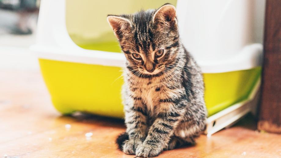 Ako si vybrať podstielku pre mačky?