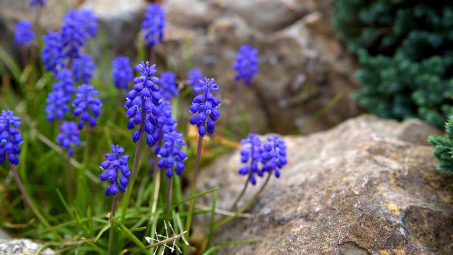 Kwiaty Wieloletnie Na Działkę Allegropl