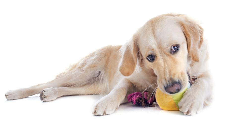 Ciekawe gadżety dla twojego psa