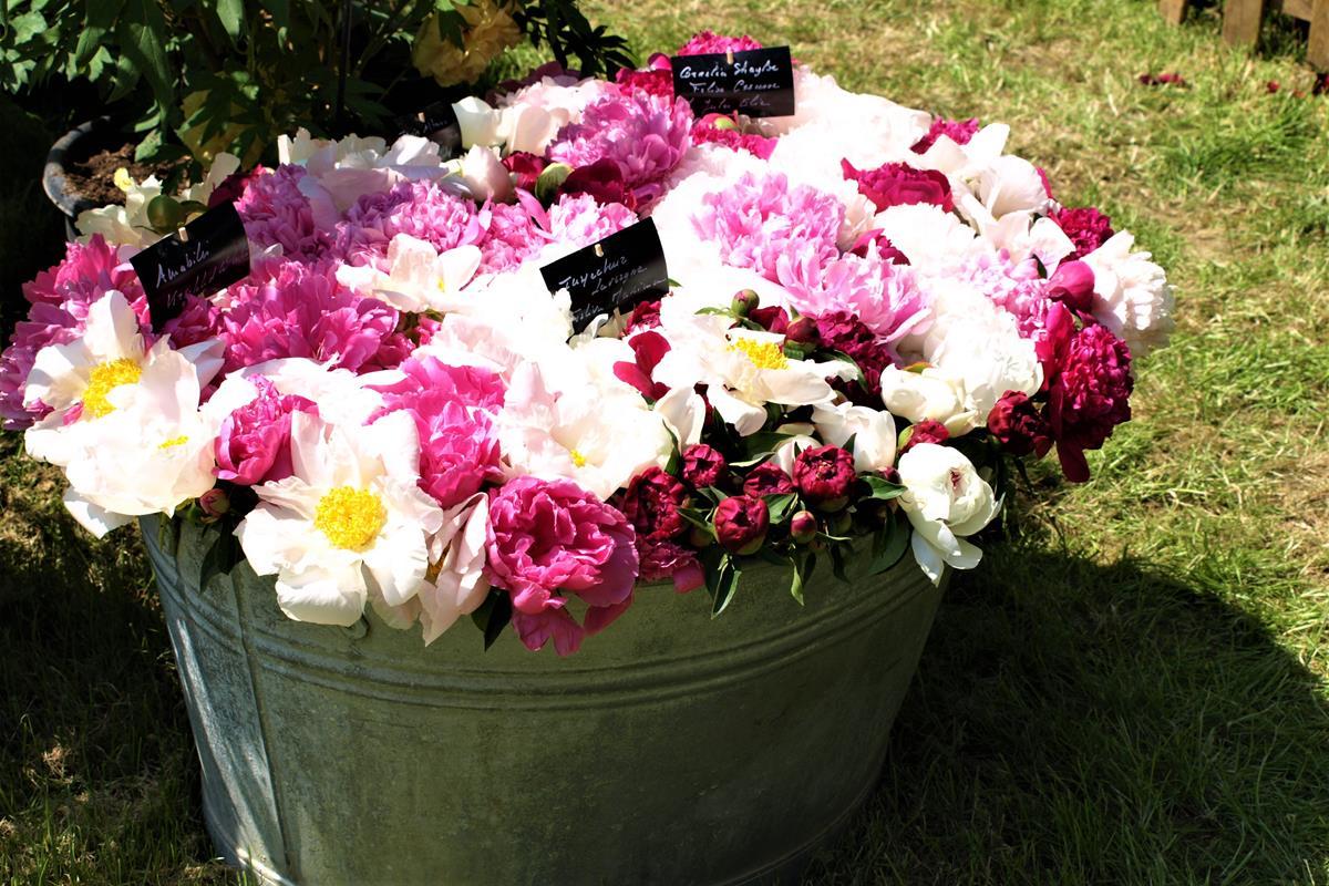 vaňa s kvetinami