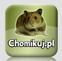 CHOMIKUJ TRANSFER - 1.3 MLN PKT [ KONTO - HIT