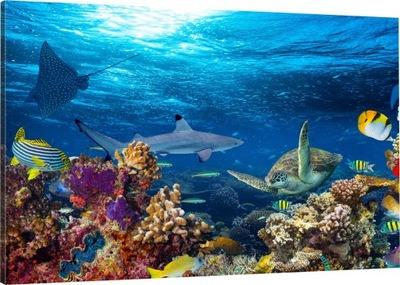 Ryby Na Rafie Koralowej Plakat 915x61 Cm 7333553453